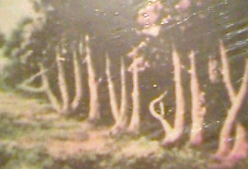 Gambar suatu pemandangan di hutan jerman